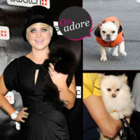 Kelly Osbourne, Paris Hilton... Quelles stars ont du chien ?