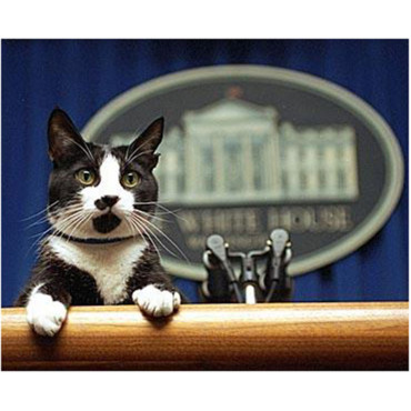 Le chat de Bill Clinton