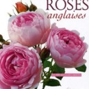 Les Roses anglaises