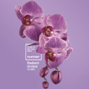 Flowers - Radiant Orchid